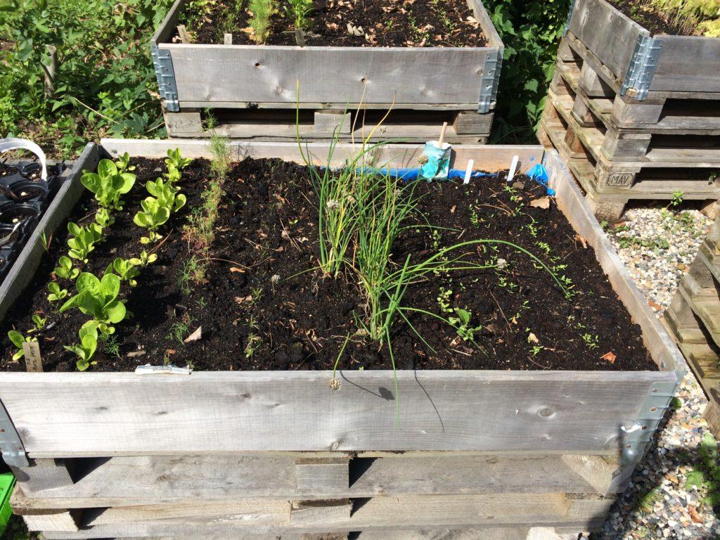 Højbed salat urter
