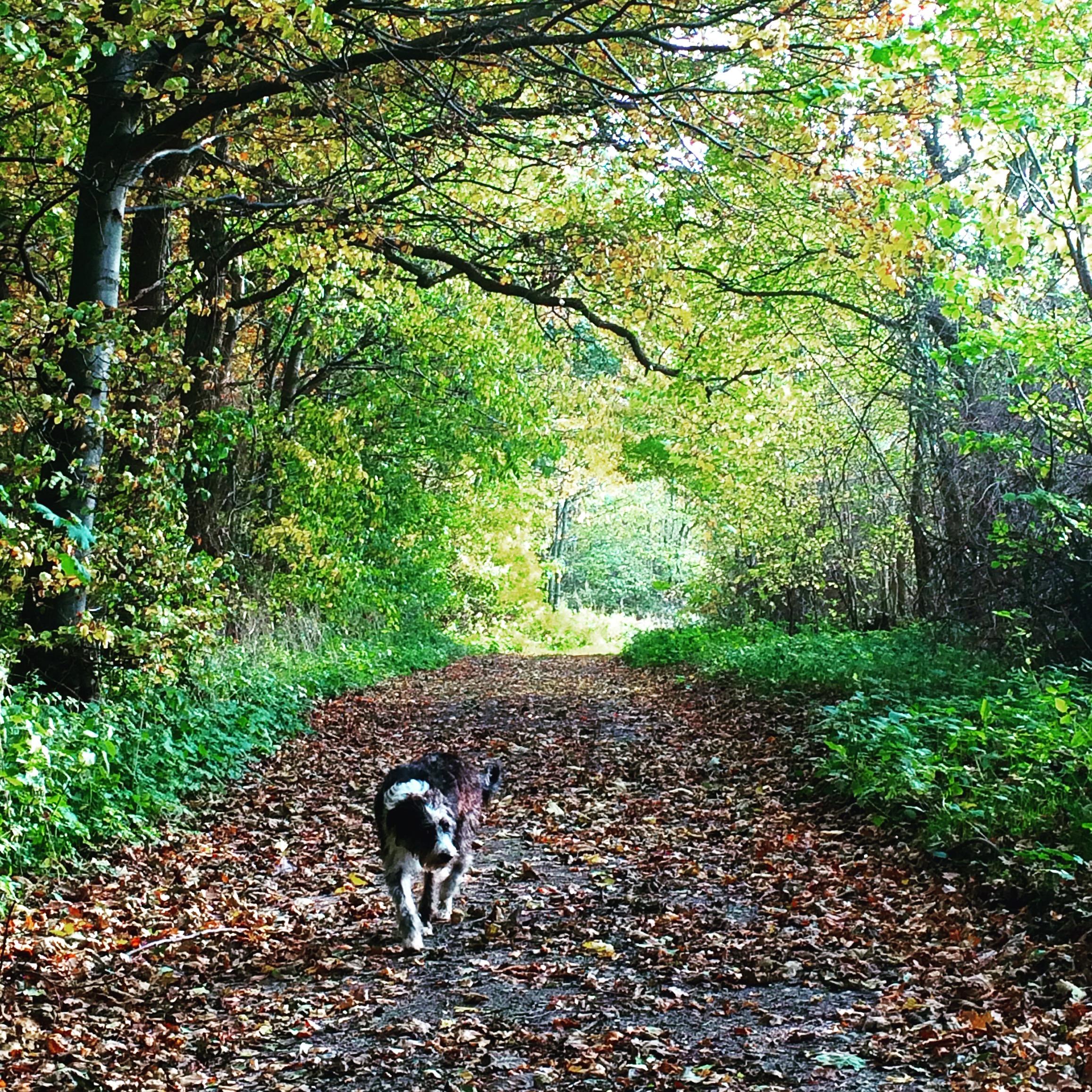 Efterårstur med hunden i skoven