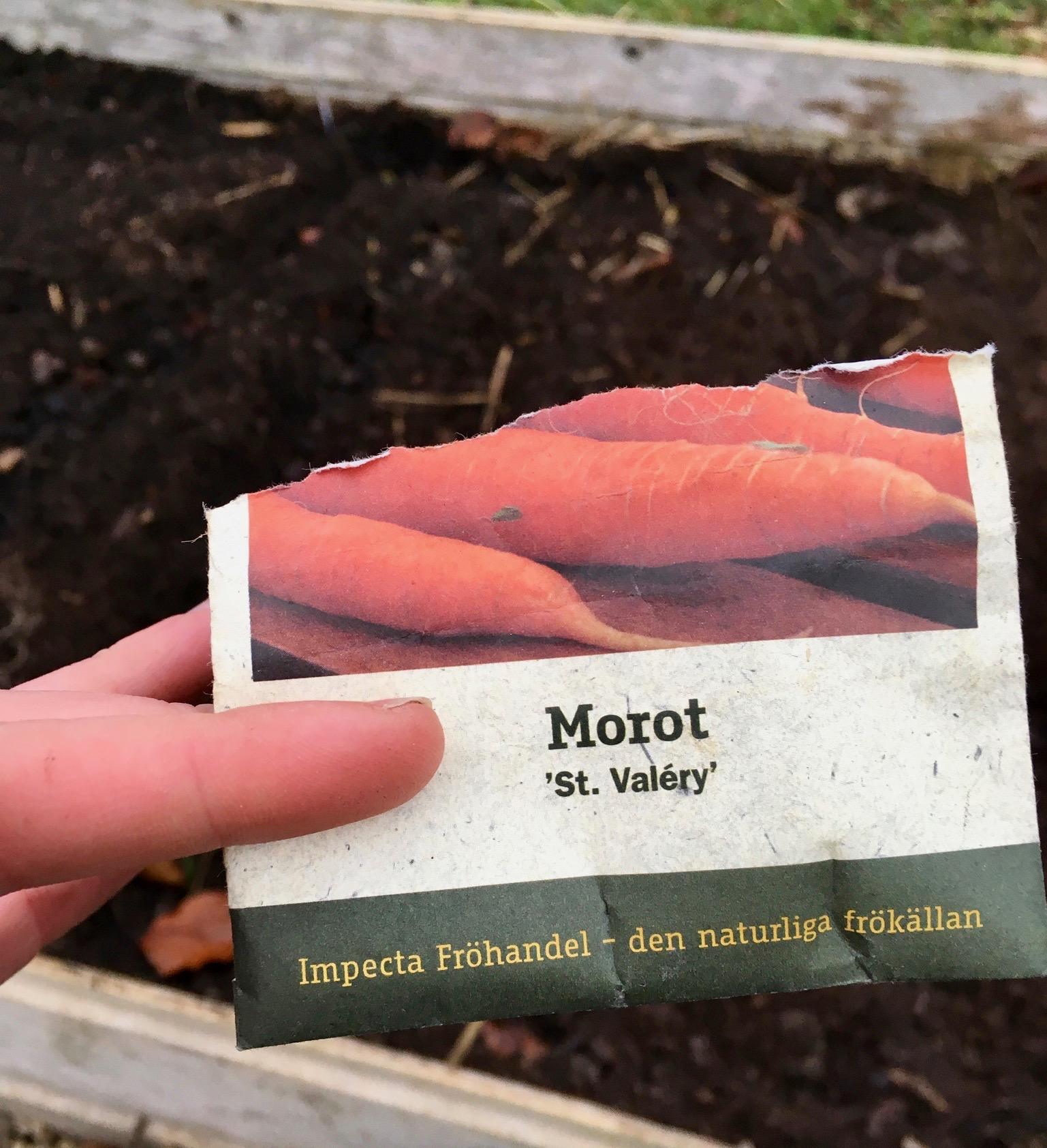 Så gulerødder i November