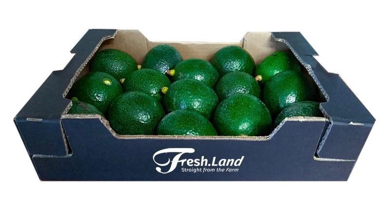 Avokadoer fra freshland
