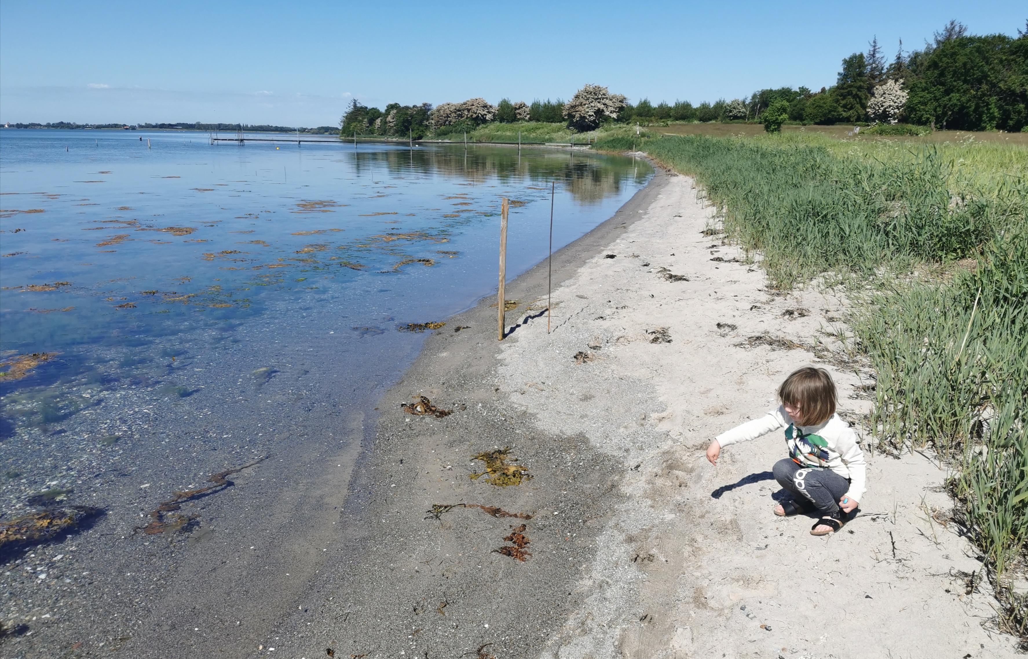 Smuk strand på Fejø.